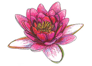 Piping Rock Lotus Flower Fragrance Oil
