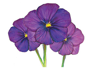 Piping Rock Violet Fragrance Oil